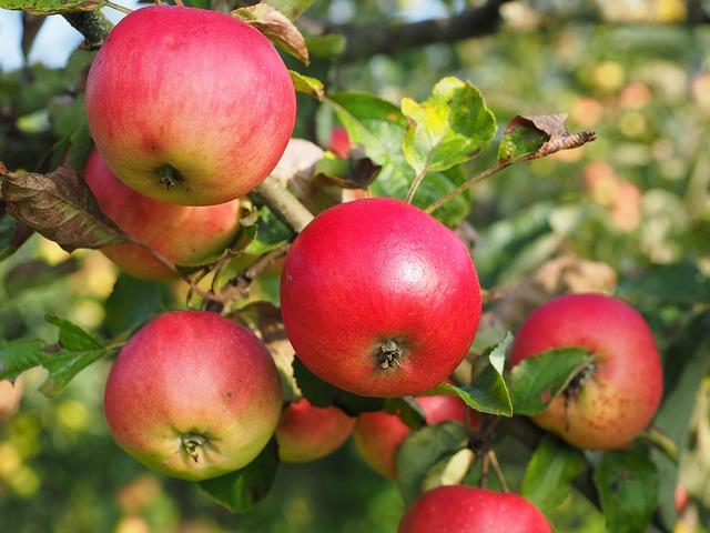 μηλα 3