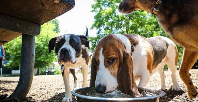 Ποτίστρες για τα αδέσποτα ζώα σε διάφορα σημεία της Αθήνας