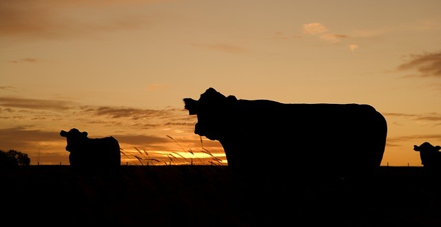 Παύση μετακινήσεων βοοειδών στο εσωτερικό της χώρας λόγω οζώδους δερματίτιδας