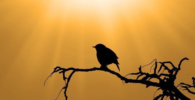 Δραματική μείωση των πληθυσμών των πουλιών