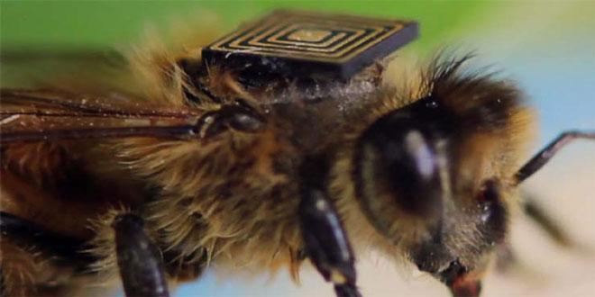 """Μέλισσες με """"μαύρο κουτί"""" θα δώσουν στοιχεία για τον αφανισμό τους"""