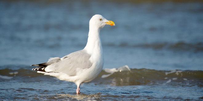 Το 90% των θαλασσοπουλιών έχει φάει πλαστικά
