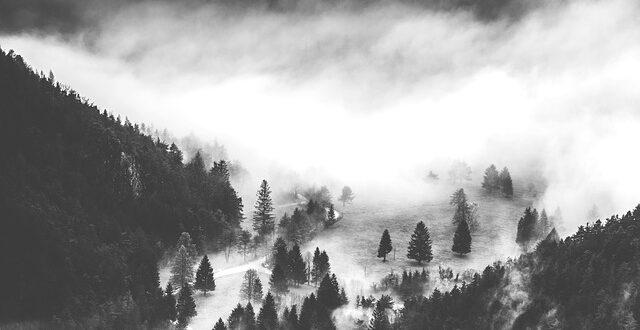Μεγάλη απειλή για τα αρκτικά δάση η κλιματική αλλαγή