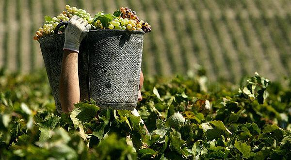 Η πρόβλεψη για την παραγωγή κρασιού σε ολόκληρη την Ευρώπη – Αναλυτικά ανά χώρα