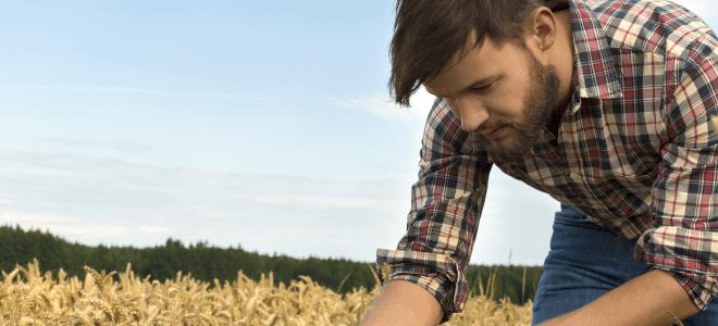 Επαγγελματίας αγρότης: Ποια θεωρούνται αγροτικά εισοδήματα και ποια δεν προσμετρώνται στο συνολικό εισόδημα