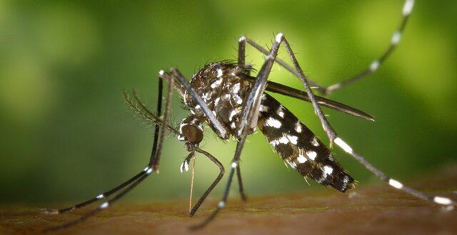 Παράσιτο ελονοσίας ανθεκτικό στα πιο αποτελεσματικά φάρμακα!