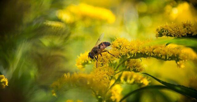 Τα νεονικοτινοειδή εντομοκτόνα σκοτώνουν τις μέλισσες