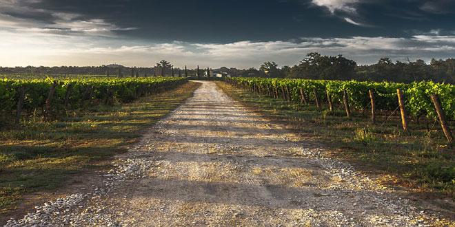 Ελληνικό κρασί, έξω πάμε καλά