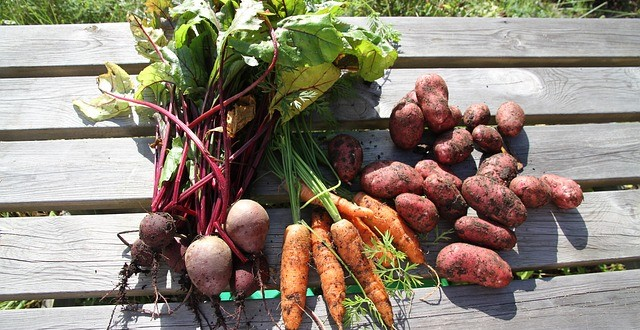 Διάθεση 100 λαχανόκηπων από το ΑΠΘ – Ξεκίνησαν οι αιτήσεις
