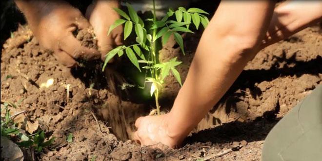 Ευρωπαϊκό Κοινοβούλιο: Κάθε αποψίλωση θα εξισορροπείται με φύτευση νέων δένδρων