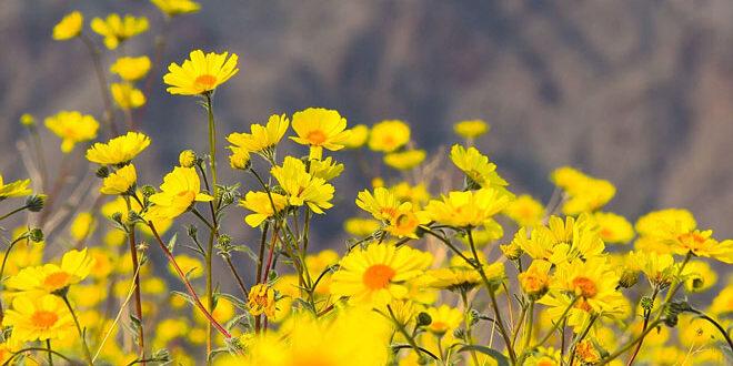 Άνθη στην έρημο