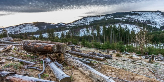 Αλβανία: Απαγόρευση της δασικής εκμετάλλευσης για 10 χρόνια