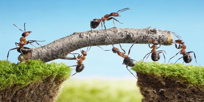 Ομάδες Παραγωγών: Το κλειδί της επιτυχίας!