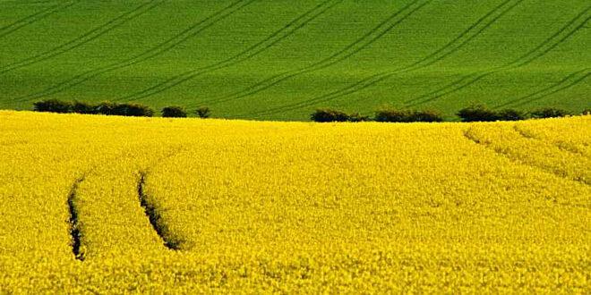 Έρευνα της ΕΕ ενοχοποιεί τις καλλιέργειες βιοκαυσίμων