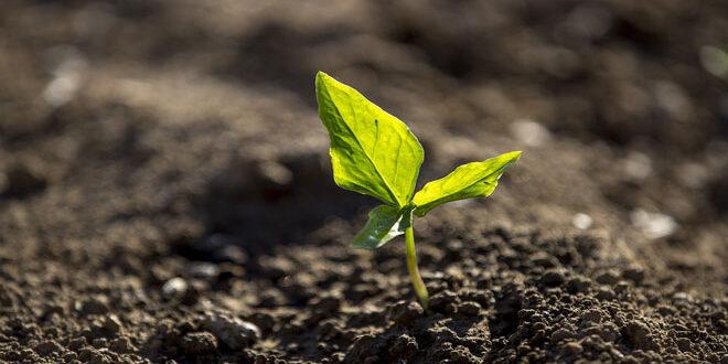 Προστασία των φυτών κατά τη διάρκεια του καύσωνα