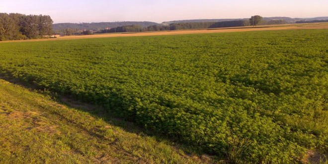 Φυτεία χασίς με περισσότερα από 10.500 δενδρύλλια εντοπίστηκε στην Καρδίτσα