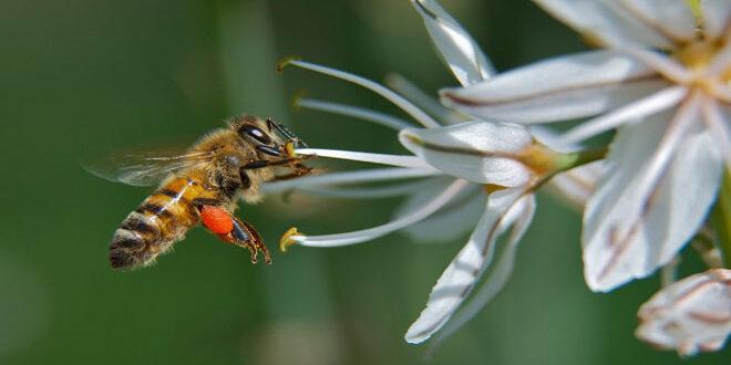 Νότια Αφρική: Περισσότερες από ένα εκατομμύριο μέλισσες νεκρές από χρήση εντομοκτόνου σε αμπελώνες