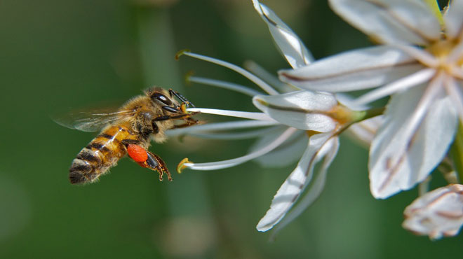 μελισσα