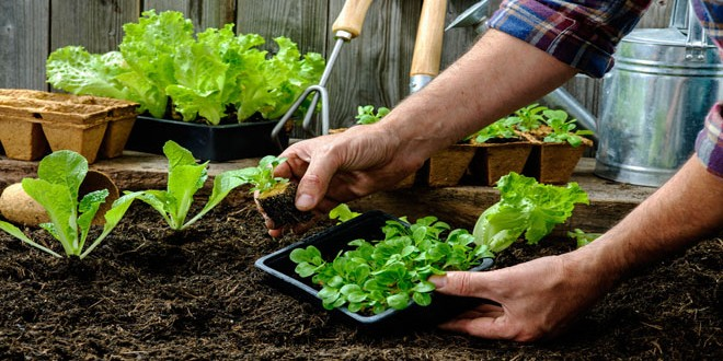 Καλλιέργησε τον δικό σου λαχανόκηπο με τη βοήθεια του ΑΠΘ