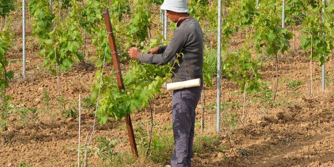 ΕΕ: Αύξηση των ενισχύσεων στους αγρότες ζητούν 6 στους 10 πολίτες