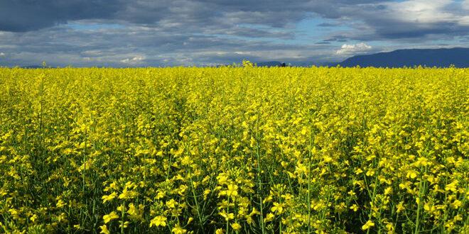 Καλιφόρνια: Η ξηρασία και η ταχεία εξέλιξη των φυτών