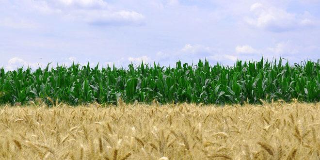 Εξαγορές μεγάλων εταιρειών αγροχημικών και σπόρων δημιουργούν αυτοκρατορίες