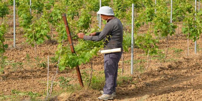 Ξεκινάει η εκπαίδευση των νέων γεωργών