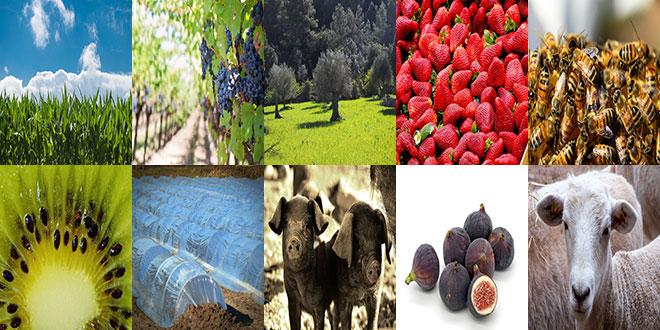Οικονομική στήριξη σε βιοπαραγωγούς – Υποβολή αιτήσεων έως 18 Δεκεμβρίου