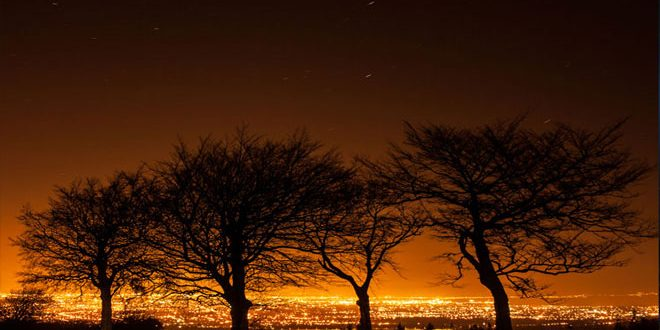 Τα φώτα των πόλεων επηρεάζουν την άνθηση δέντρων και φυτών