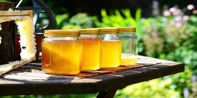 Υψηλές συγκεντρώσεις νεοκοτινοειδών φυτοφαρμάκων στο μέλι