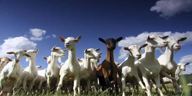 Ενισχύσεις σε κτηνοτρόφους της Κρήτης για την αγορά ζωοτροφών
