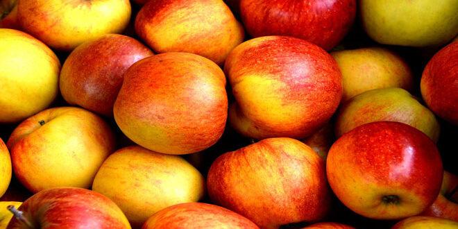 Η χώρα με τη μεγαλύτερη παραγωγή μήλων και οι 10 μεγαλύτεροι εξαγωγείς παγκοσμίως