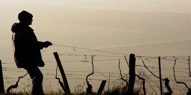 Μείωση της βασικής ενίσχυσης για την ενίσχυση νέων γεωργών – Ποιοι είναι δικαιούχοι