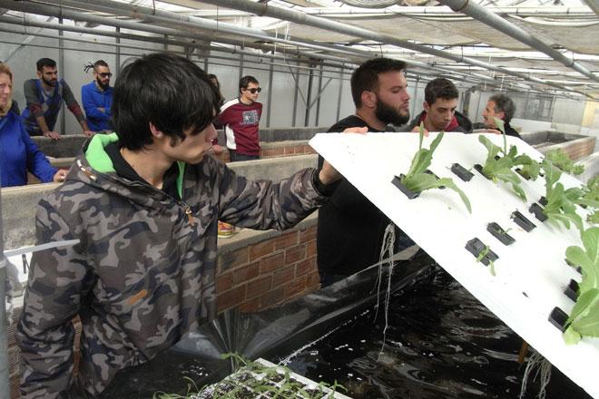 Υδροπονική καλλιέργεια μαρουλιού στο εργ. Ανθοκηπευτικών Καλλιεργειών