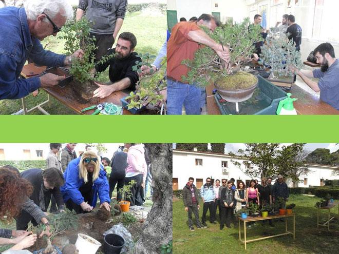 Εργασίες διαμόρφωσης φυτών μπονσάϊ στο εργ. Φυτών Κηποτεχνίας
