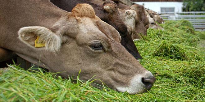Ν. Ζηλανδία: Εξαίρεση της γεωργίας/κτηνοτροφίας από τα μέτρα για την κλιματική δράση;