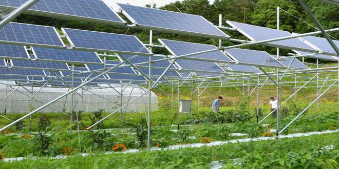 Διπλή εκμετάλλευση των γεωργικών εκτάσεων με καλλιέργειες και φωτοβολταϊκά