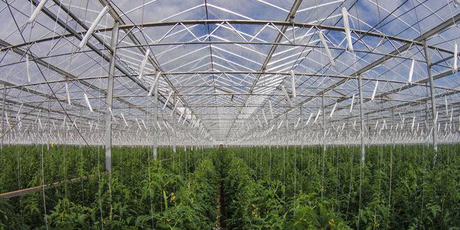 Αυστραλία: Παραγωγή 17.000 τόνων λαχανικών ετησίως στην έρημο