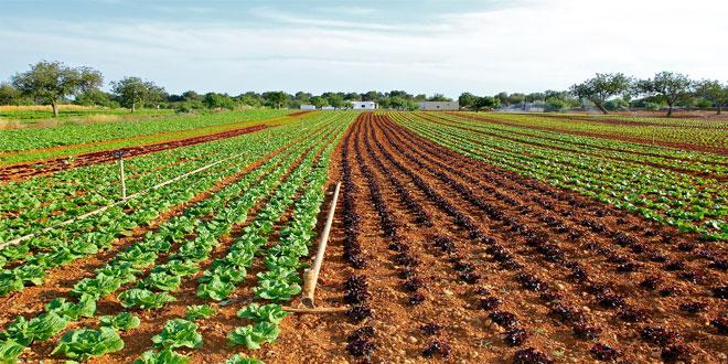 Ξηρασία, υπερθέρμανση και μείωση της βιοποικιλότητας απειλούν τις καλλιέργειες λαχανικών