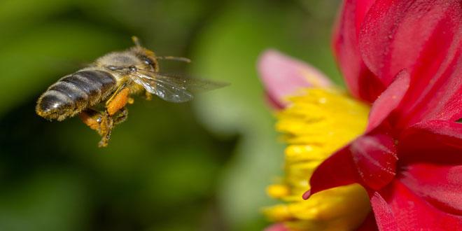 Παγκόσμια Ημέρα Μέλισσας: Γιατί εξαρτόμαστε από την επιβίωσή της