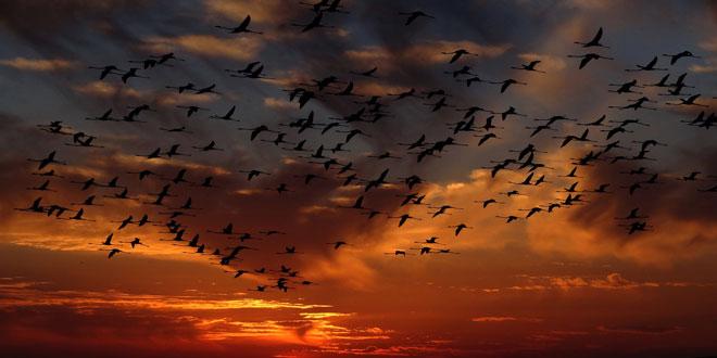 Β. Αμερική: 1,5 δισεκατομμύριο πτηνά λιγότερα στους ουρανούς από το 1970