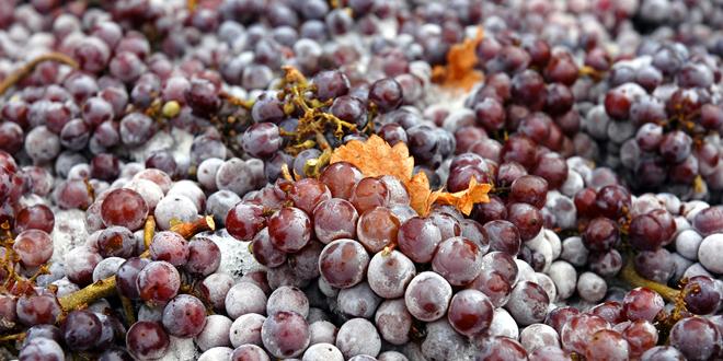 Παγκόσμια παραγωγή κρασιού: Στα χαμηλότερα επίπεδα της τελευταίας τετραετίας