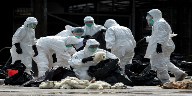Πολωνία: Κρούσματα της γρίπης των πτηνών σε γαλοπούλες