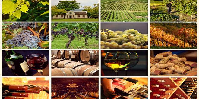 Ιταλία: Πρώτη παγκοσμίως στην παραγωγή κρασιού παρά την αναμενόμενη μείωση