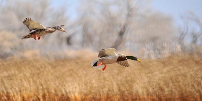 Βουλγαρία: Νέο κρούσμα της γρίπης των πτηνών