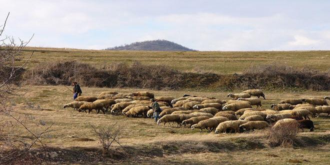 Εγκρίθηκε το Πρόγραμμα Οικονομικών Αποζημιώσεων για την προστασία του ζωικού κεφαλαίου