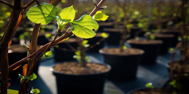Διάθεση δασικού φυτευτικού υλικού από το Δασικό Φυτώριο Χανίων