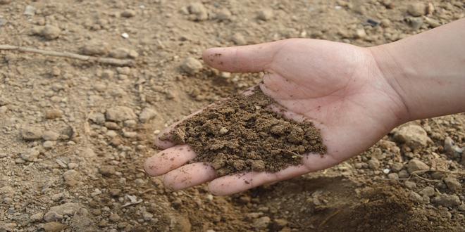 Κατάρ: Καλλιέργειες σε χώμα που παράγουν οι γεωργοί