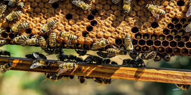 Τα 16 Κέντρα Μελισσοκομίας – Οι Περιφερειακές Ενότητες που καλύπτουν