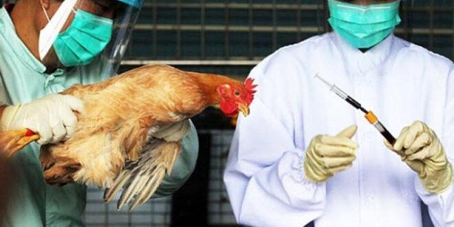 Γρίπη των πτηνών: Επείγουσα ενημέρωση πτηνοτρόφων και κατόχων οικόσιτων πουλερικών